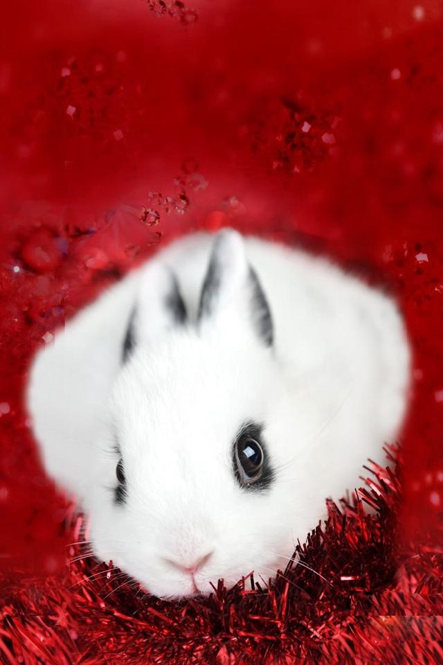 壁纸 动物 狗 狗狗 兔子 640_960 竖版 竖屏 手机