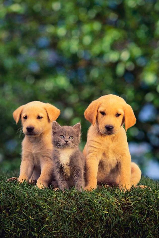 萌宠 狗狗 可爱 搞笑 贱的 动物 棕色 苹果手机高清
