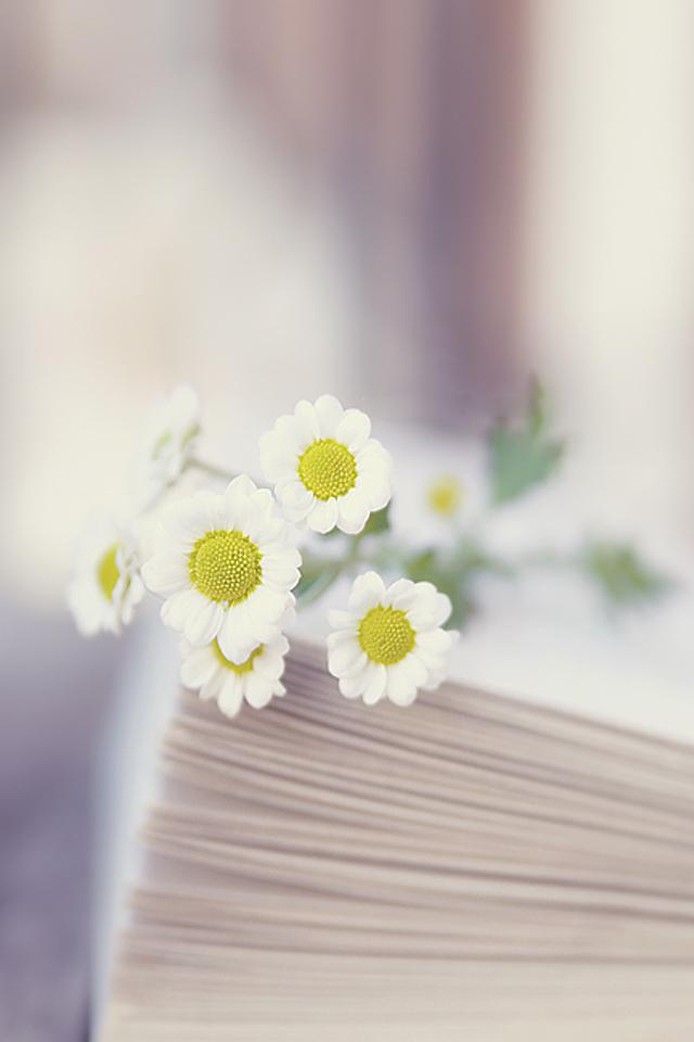 书本,花朵,鲜花