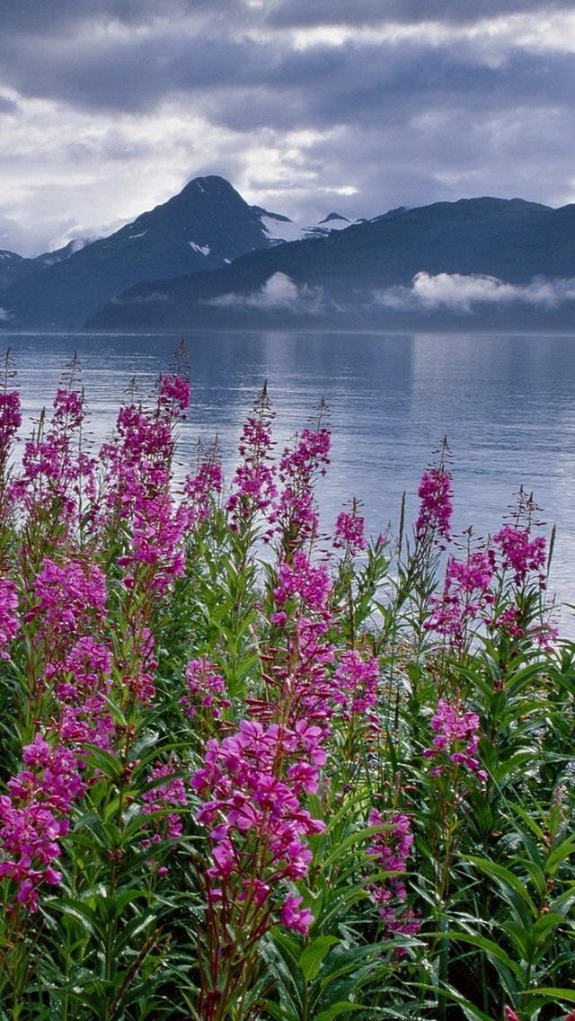 iphone5/5s壁纸,植物花卉,风景壁纸