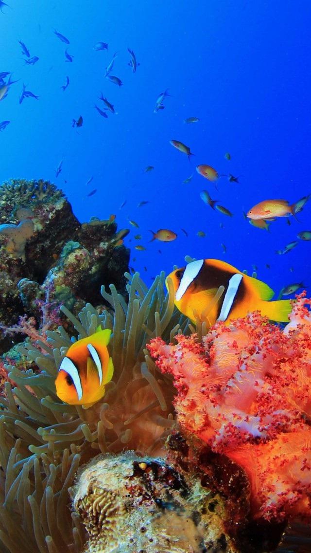 壁纸 海底 海底世界 海洋馆 水族馆 桌面 640_1136 竖版 竖屏 手机