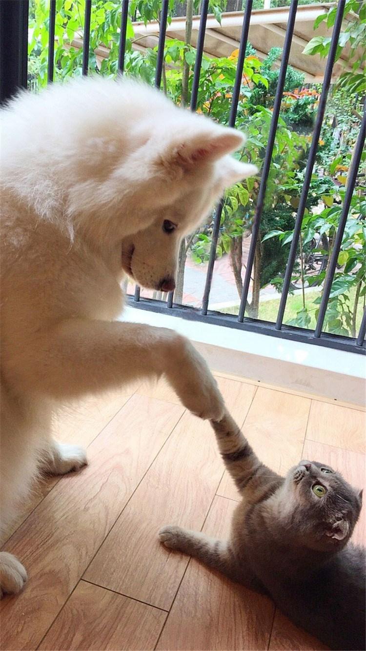 知道:狗狗跟猫咪 苹果手机高清壁纸 750x1334
