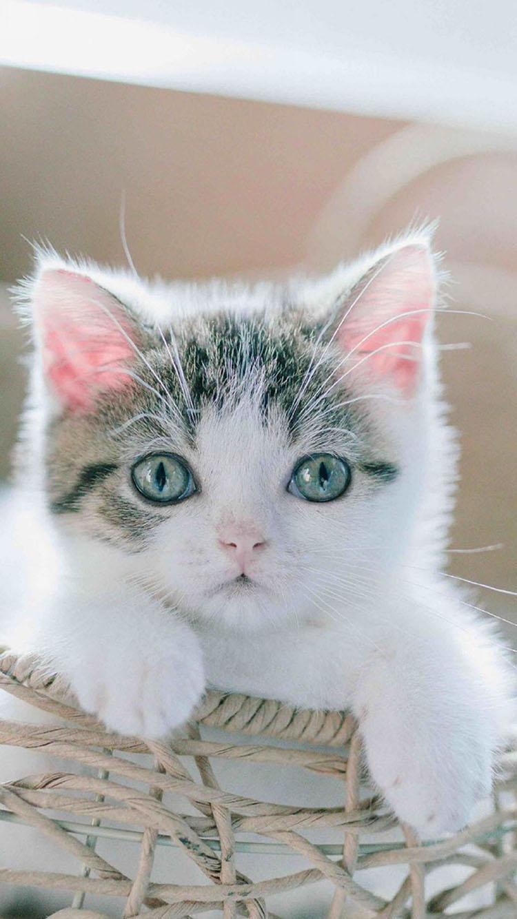喵咪 萌宠 猫 可爱
