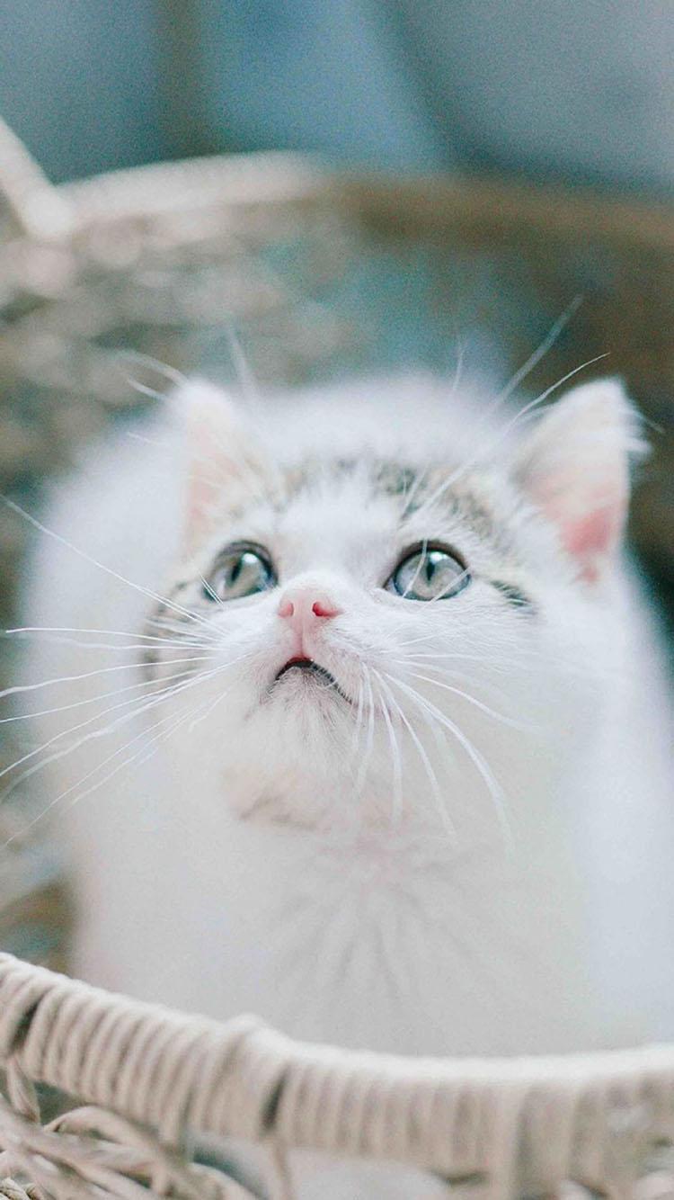 猫咪 黑白 黑猫 雪地 苹果手机高清壁纸 750x1334