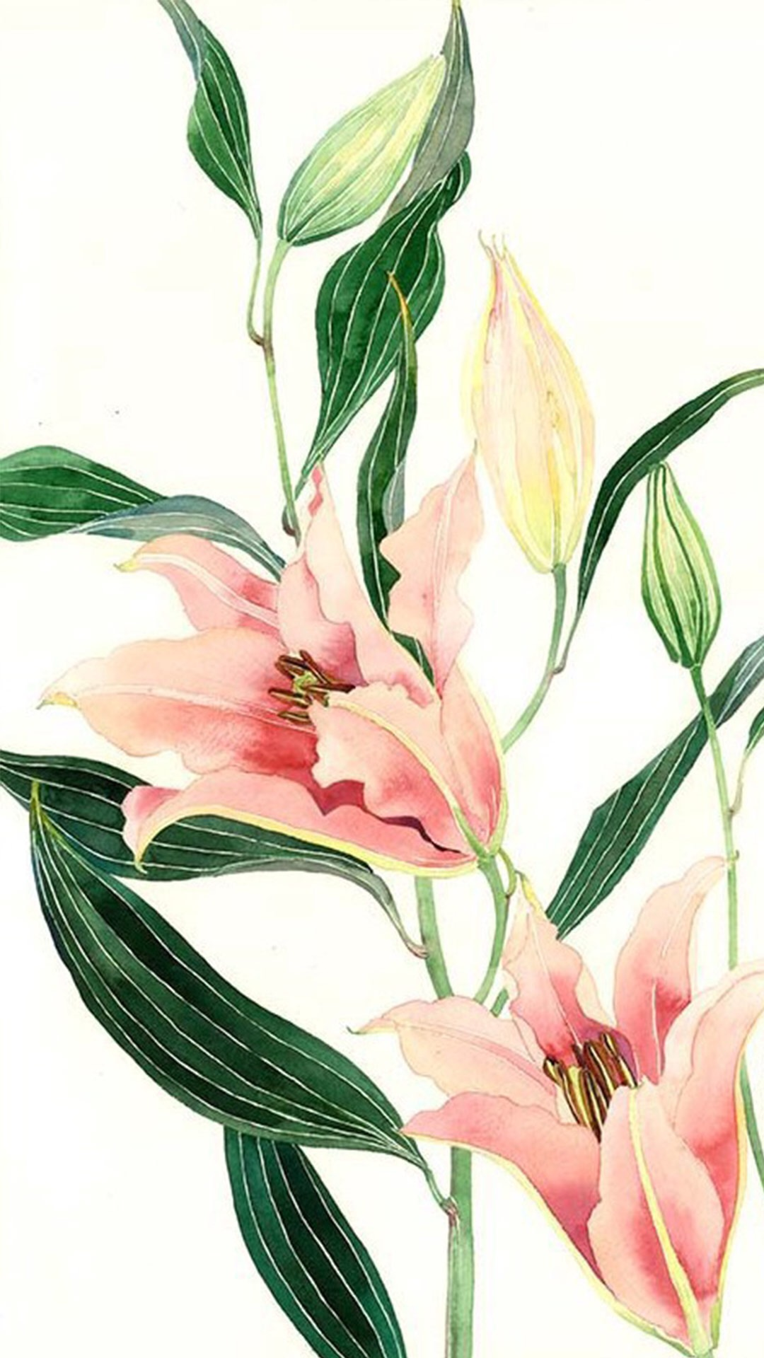 手绘 花卉 苹果手机高清壁纸 1080x1920_爱思助手