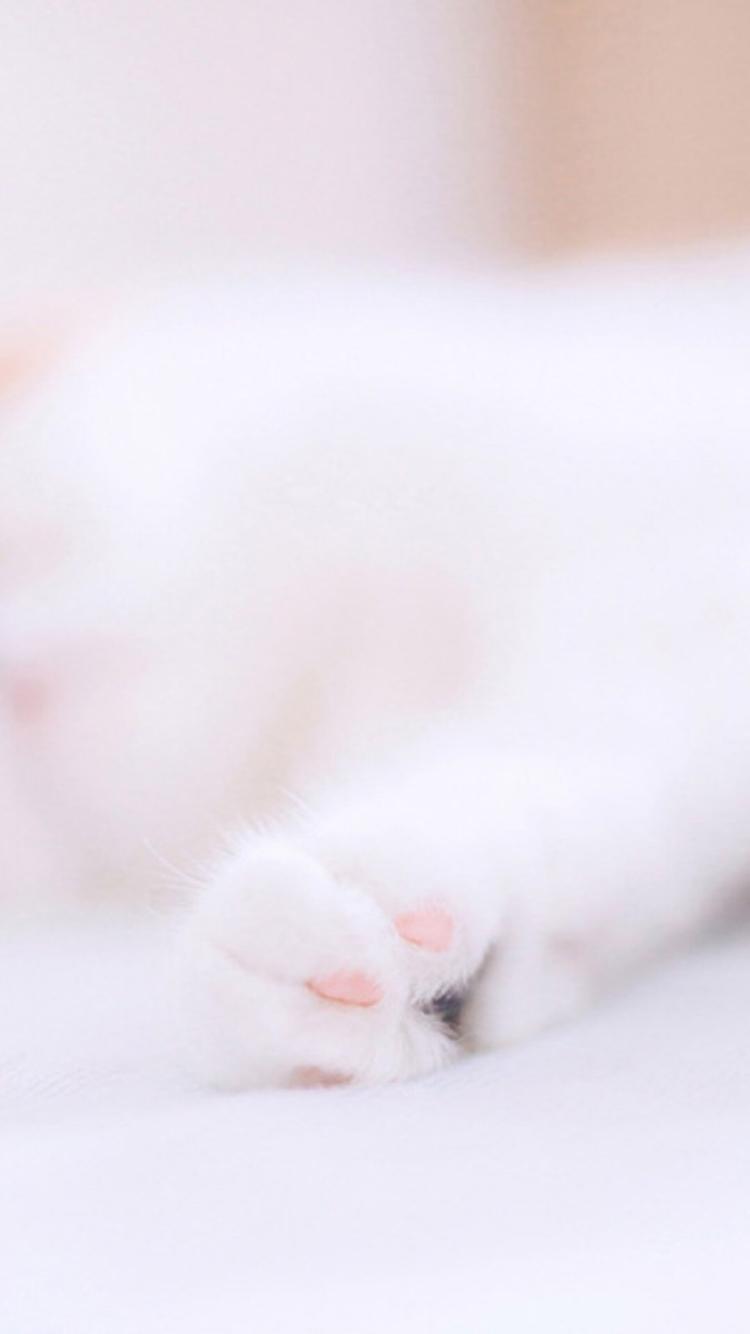 萌喵 猫咪 爪子