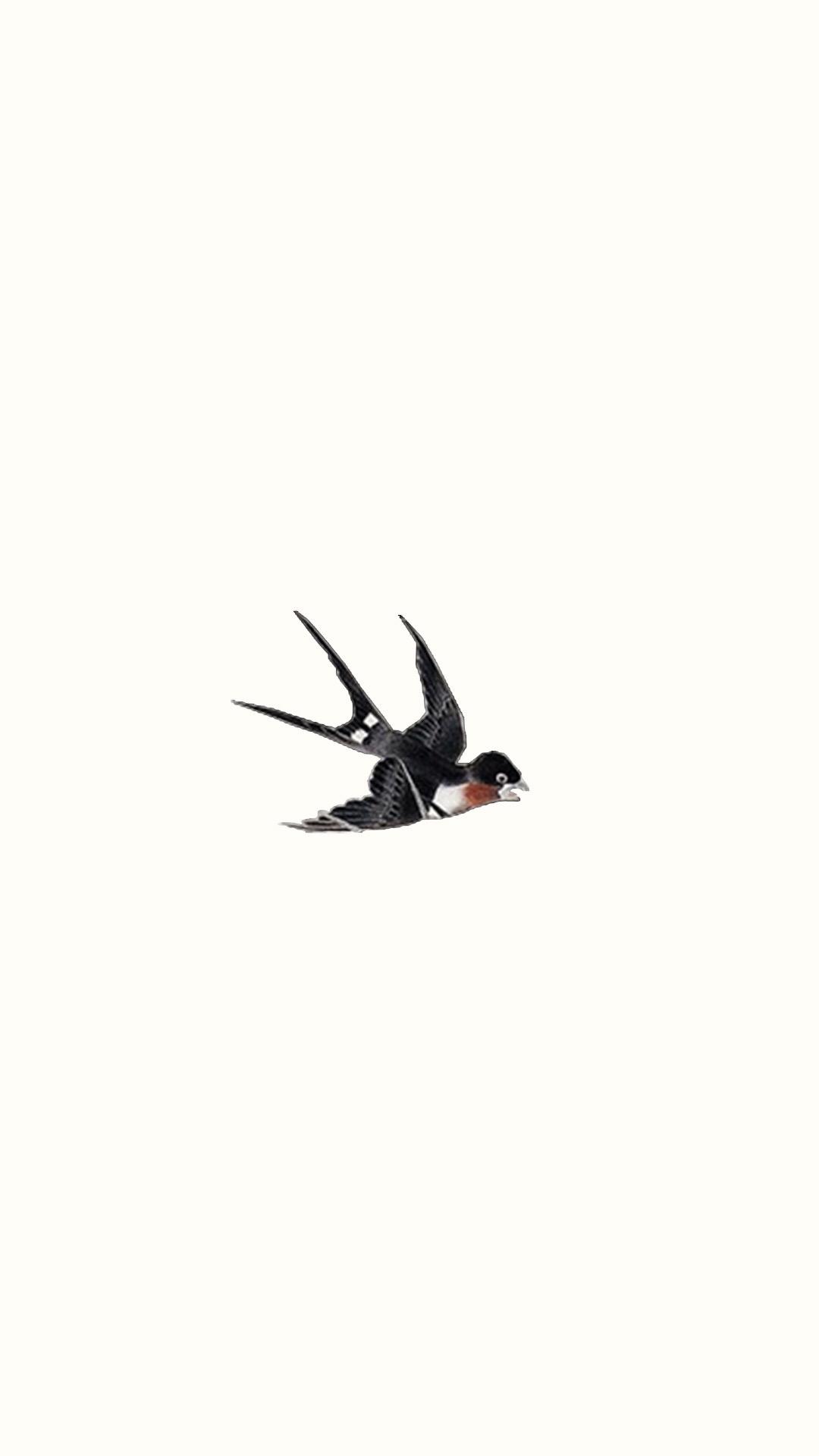 简约动物插画 燕子