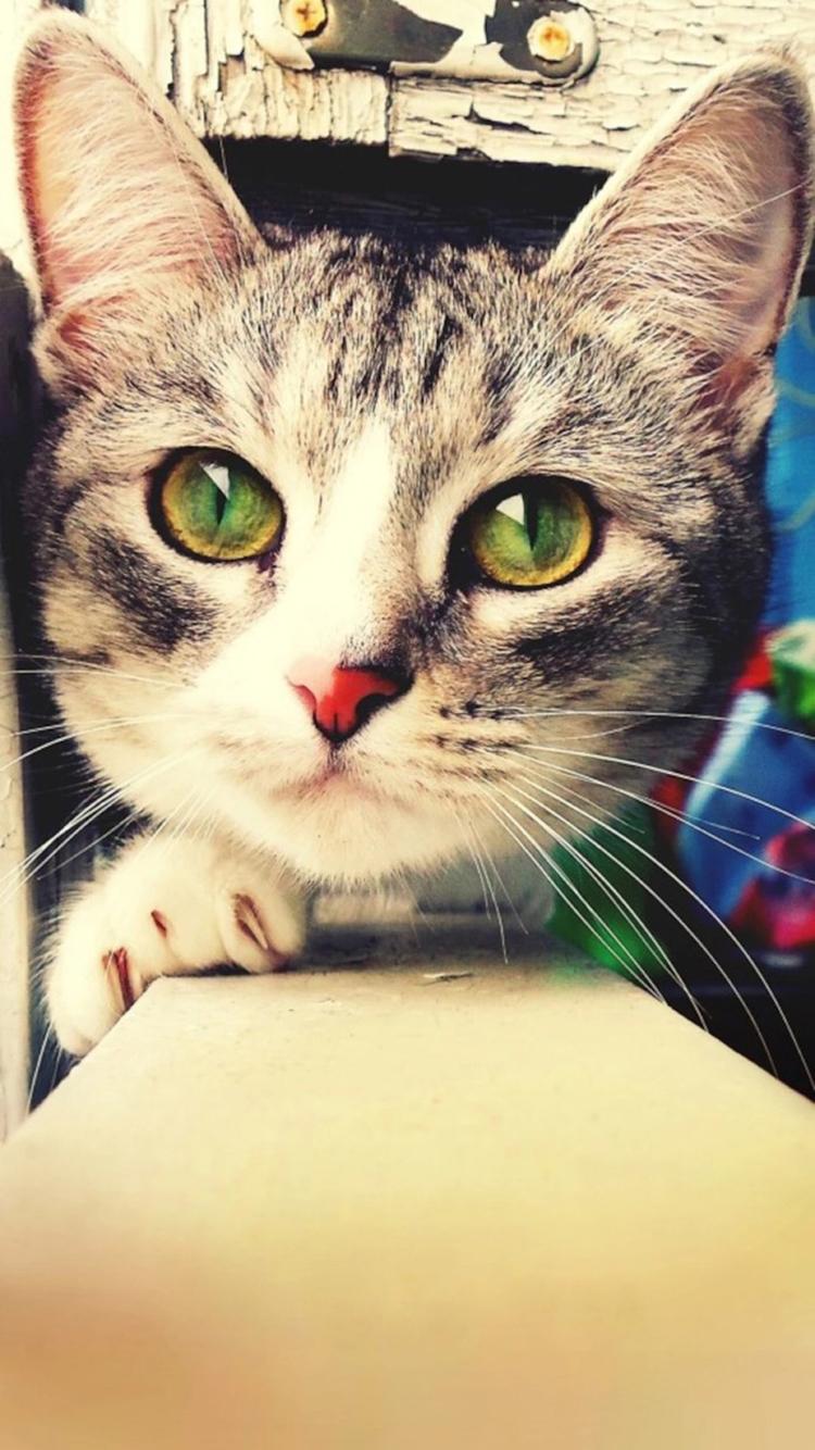 大眼睛猫咪 苹果手机高清壁纸 750x1334_爱思助手