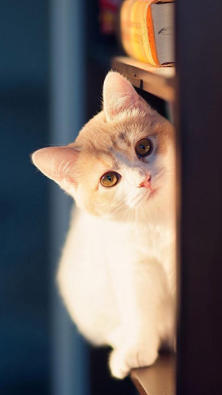 动物图片可爱画像萌