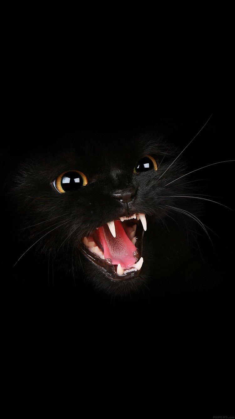 高清 创意 黑猫 苹果手机高清壁纸 750x1334_爱思助手