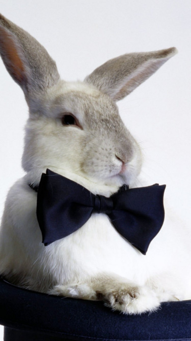 兔子 苹果手机高清壁纸 750x1334_爱思助手