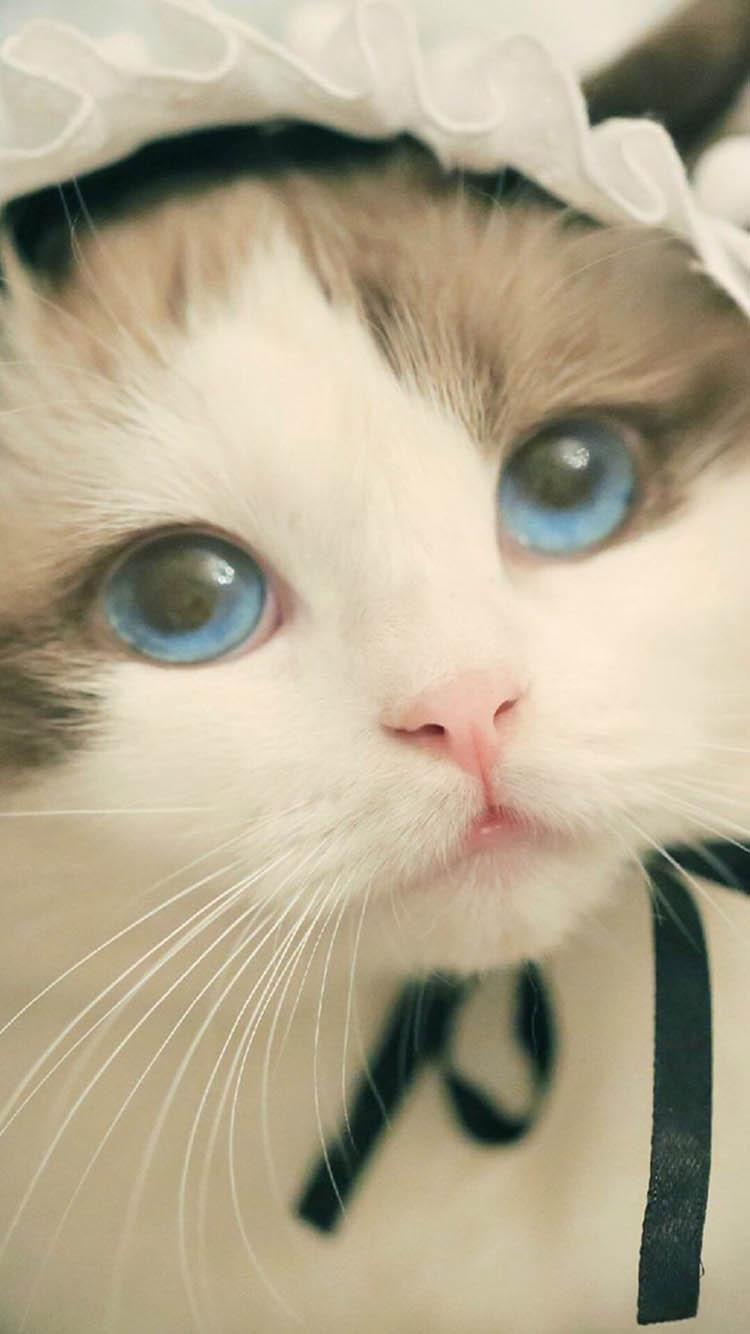 壁纸 动物 猫 猫咪 小猫 桌面 750_1334 竖版 竖屏 手机
