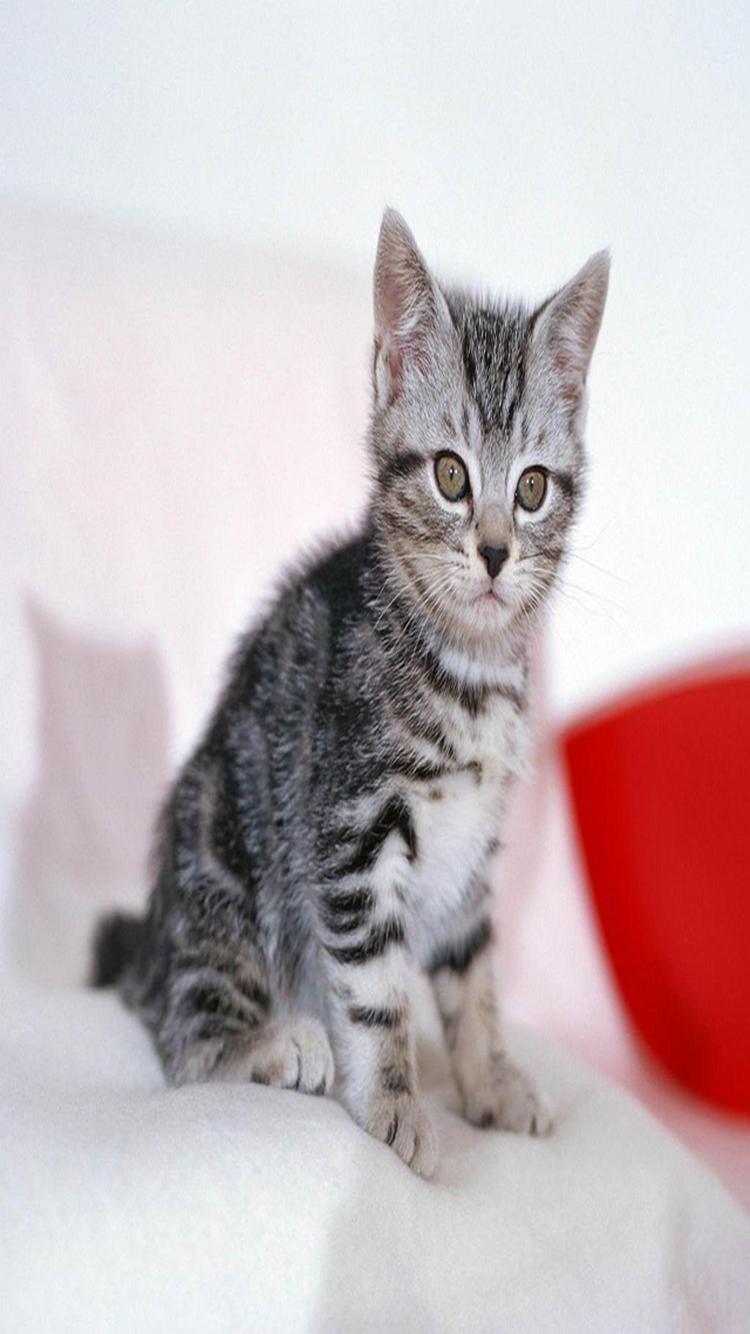 小猫 手绘 can i 猫咪 苹果手机高清壁纸 750x1334