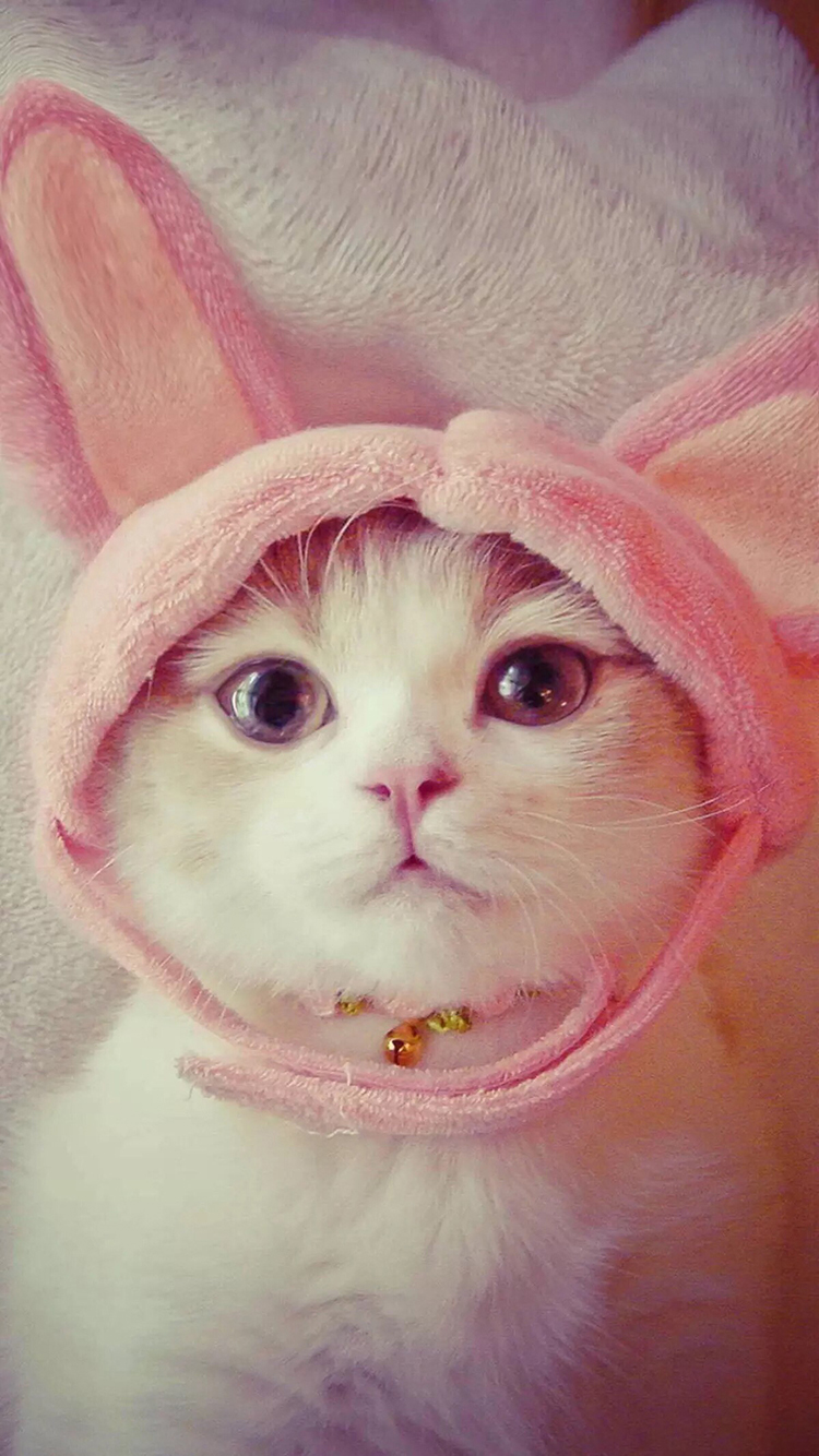 兔子 兔耳朵 可爱 彩色 苹果手机高清壁纸 750x1334