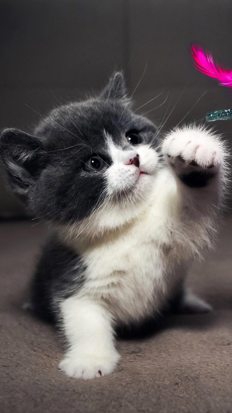 猫咪 苹果手机高清壁纸 750x1334_爱思助手