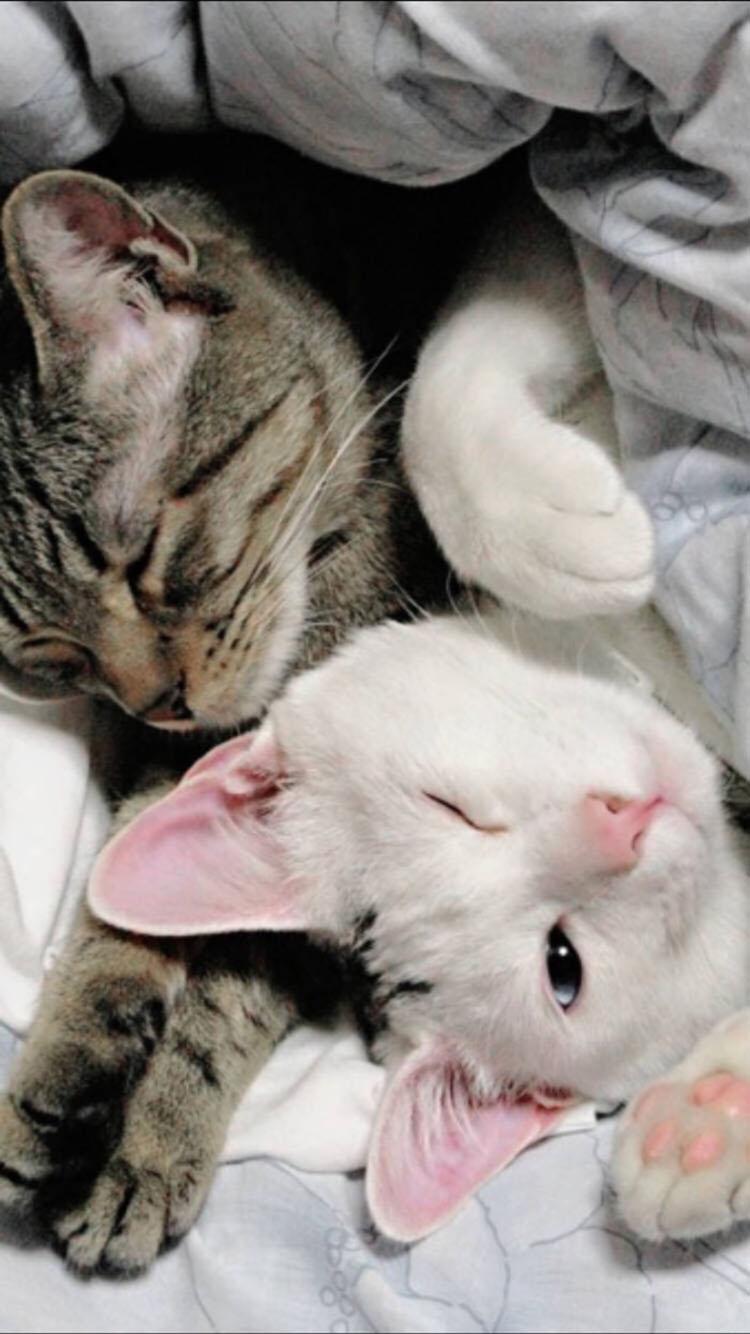 情侣 猫咪 苹果手机高清壁纸 750x1334_爱思助手