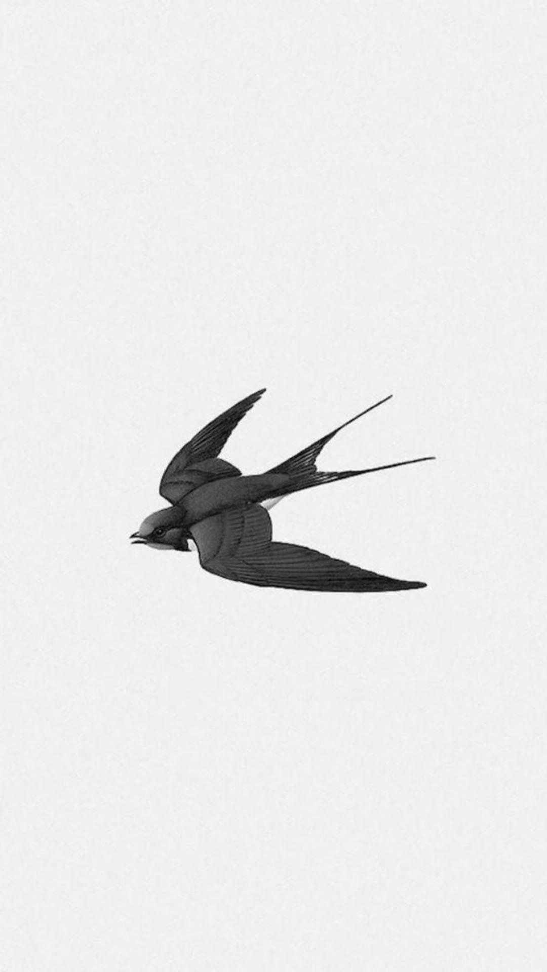 手绘 黑色小燕子