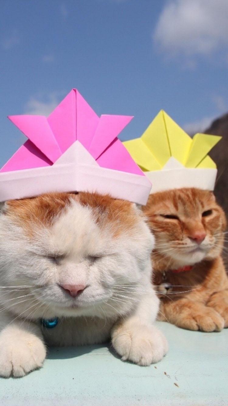 两只戴帽子的猫咪 苹果手机高清壁纸 750x1334_爱思