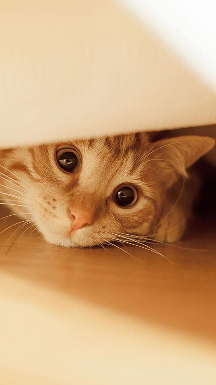 猫趴 喵星人 大眼睛 可爱 宠物 萌 苹果手机高清壁纸