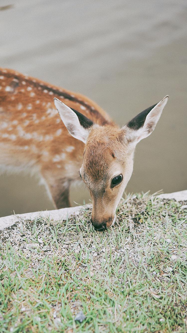 蜻蜓 小鹿 动物 唯美 苹果手机高清壁纸 750x1334