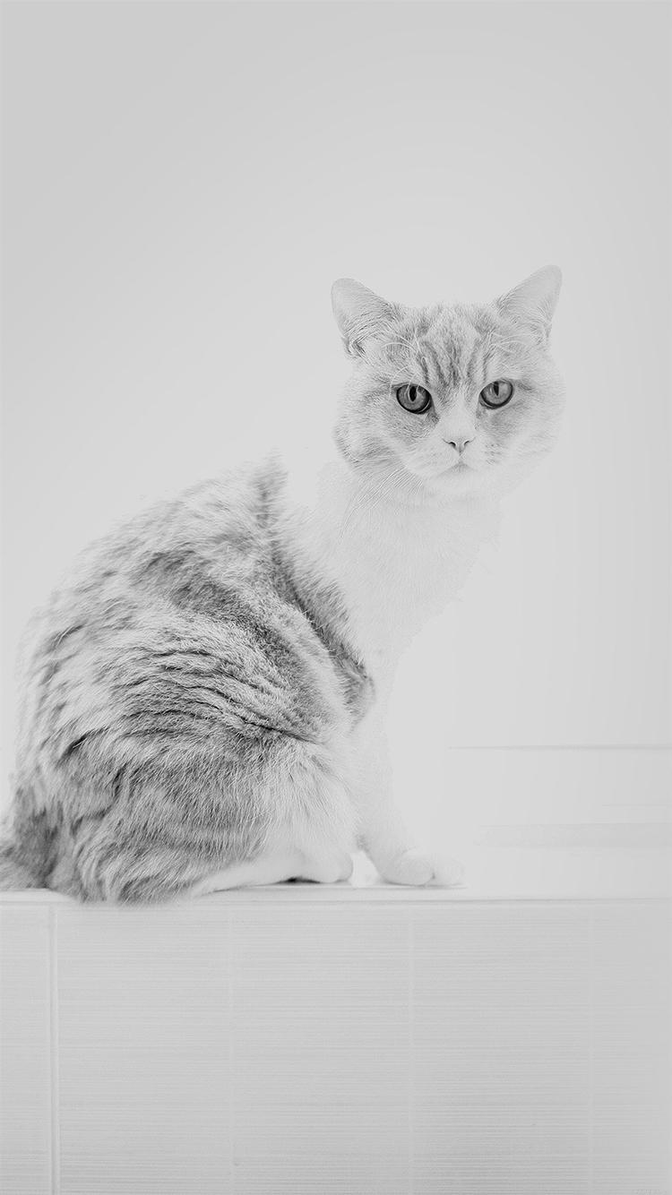 猫咪 动物 黑白 萌物 宠物