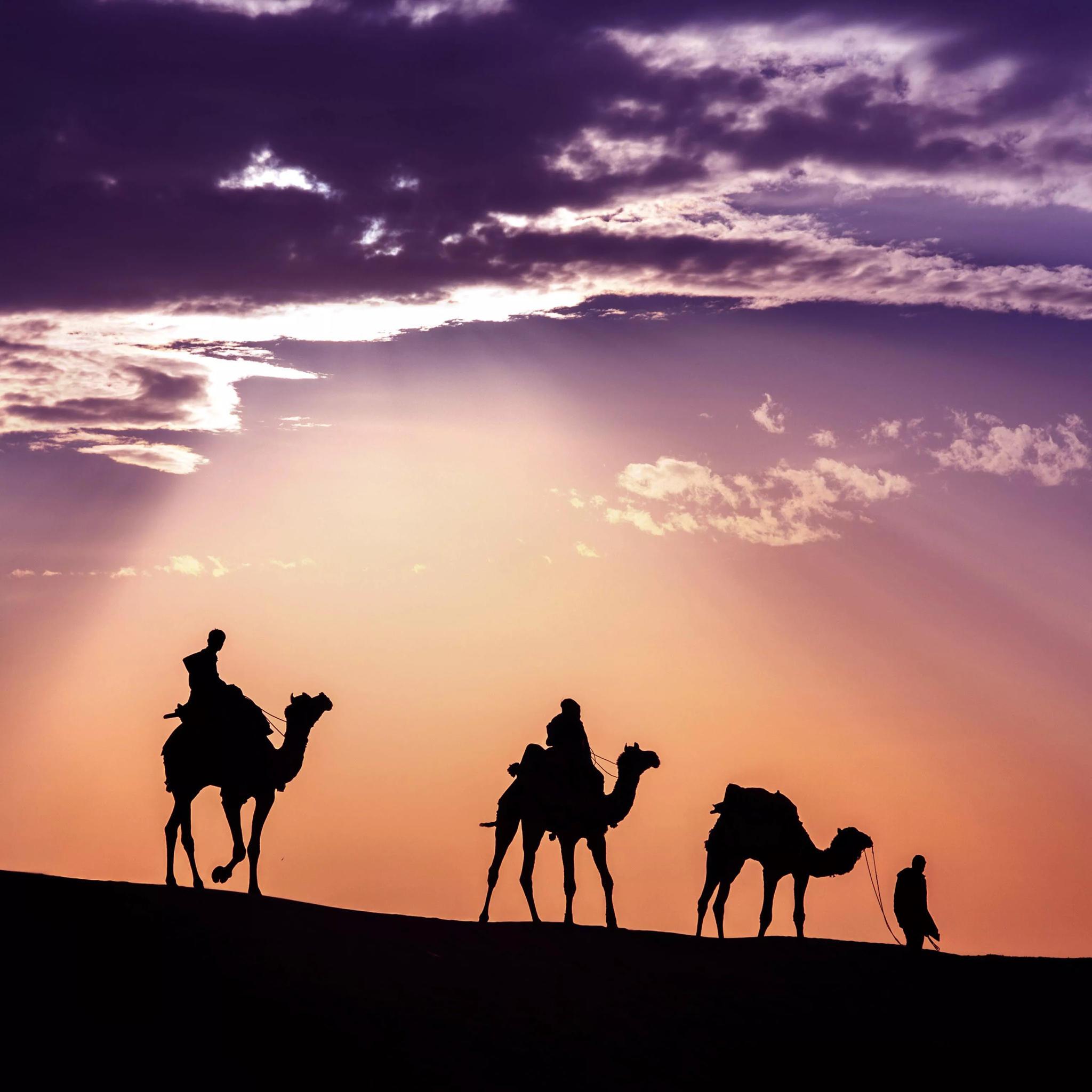 沙漠 天空 骆驼 背影 太阳