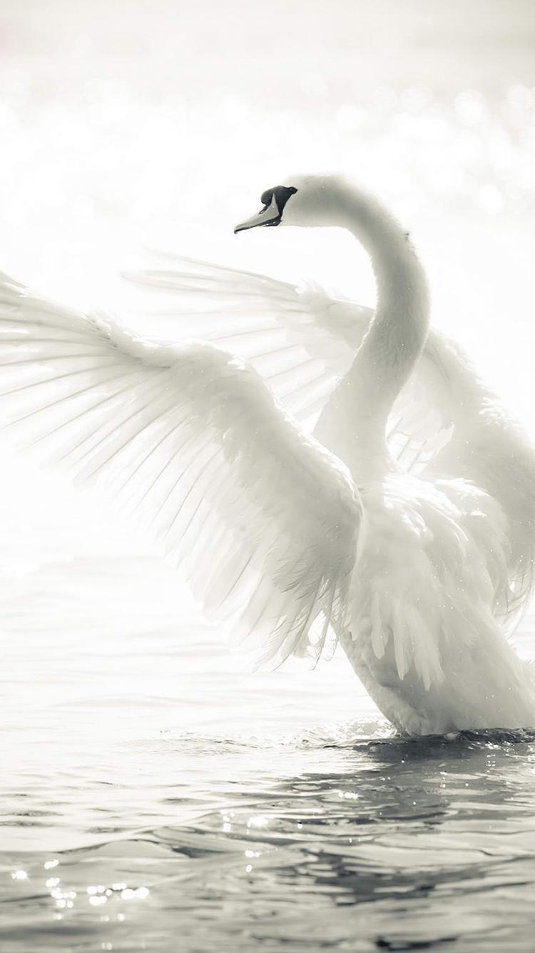 海鸥 蓝天 白云 动物.jpeg 苹果手机高清壁纸 750x