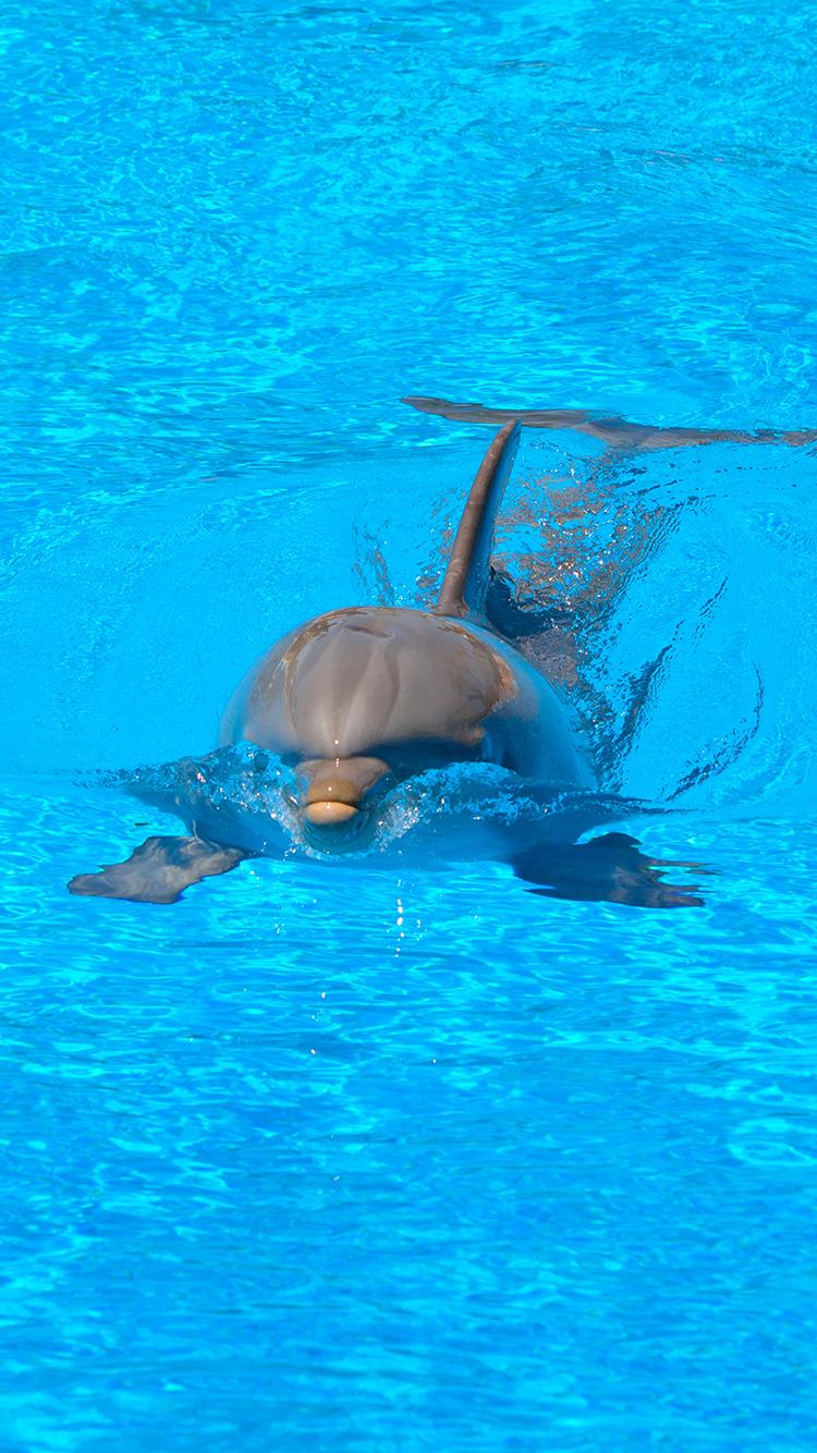 海豚 动物 蓝色 大海 游泳 海洋生物