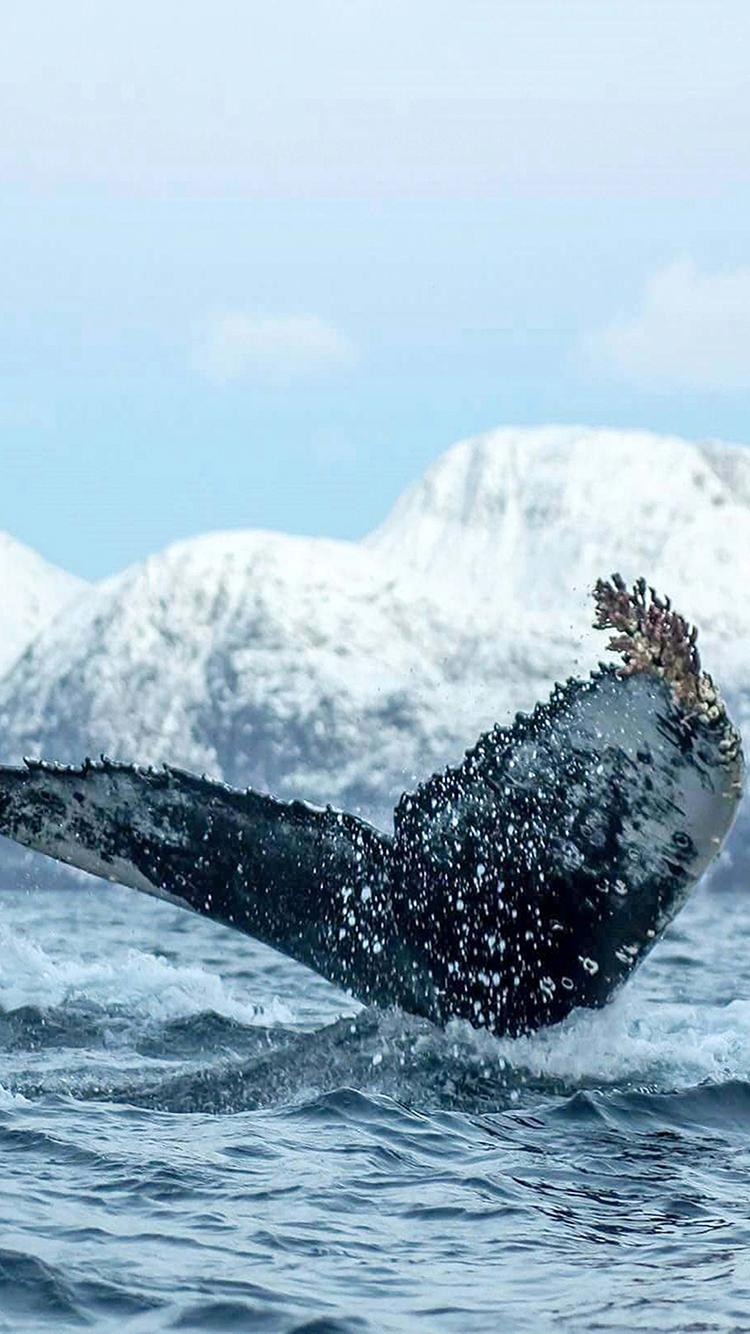 大海 苹果手机高清壁纸 750x-大量的海洋垃圾给海洋生物带来的威胁