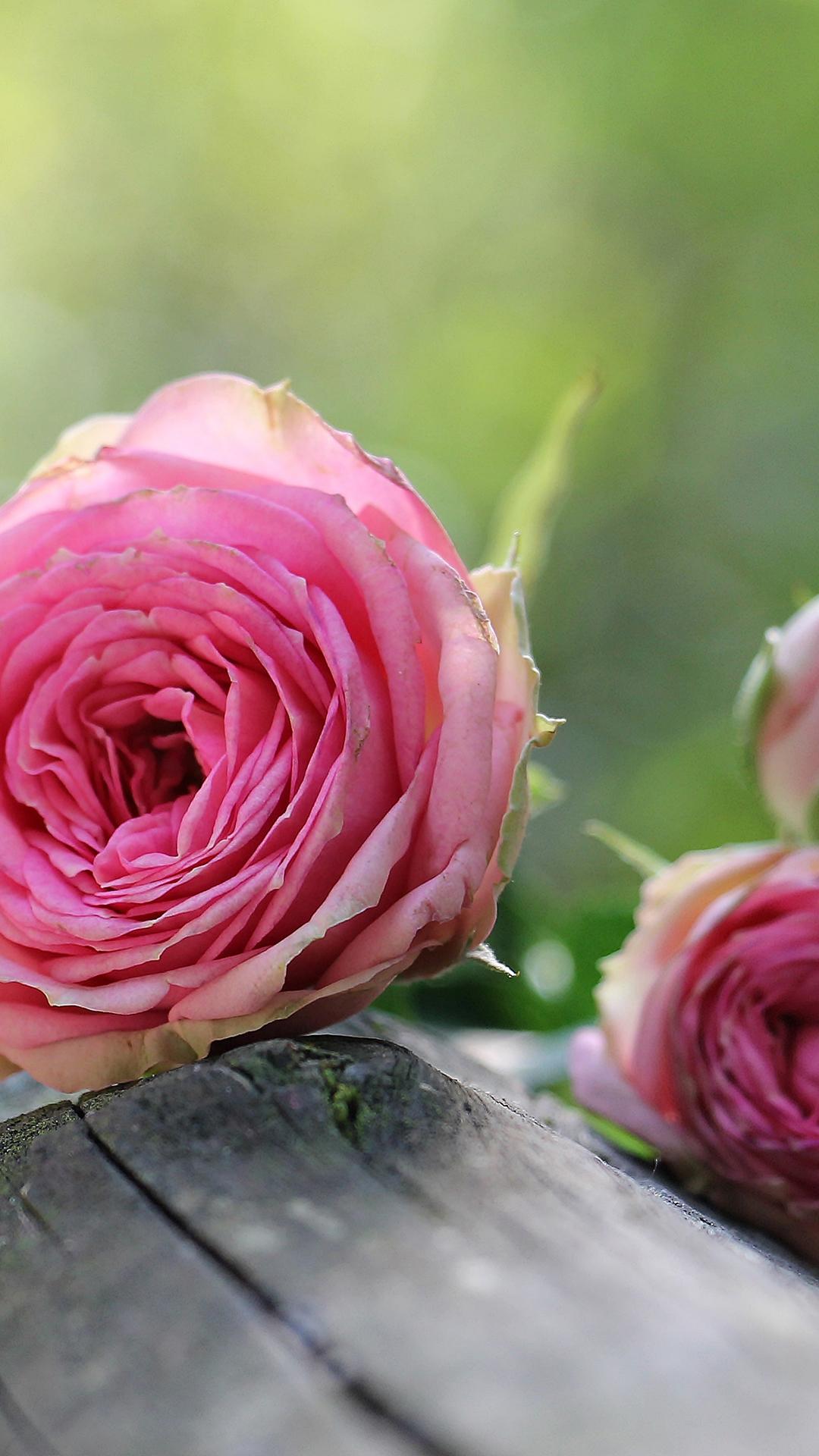 植物 布什粉红色小花 鲜花 芽