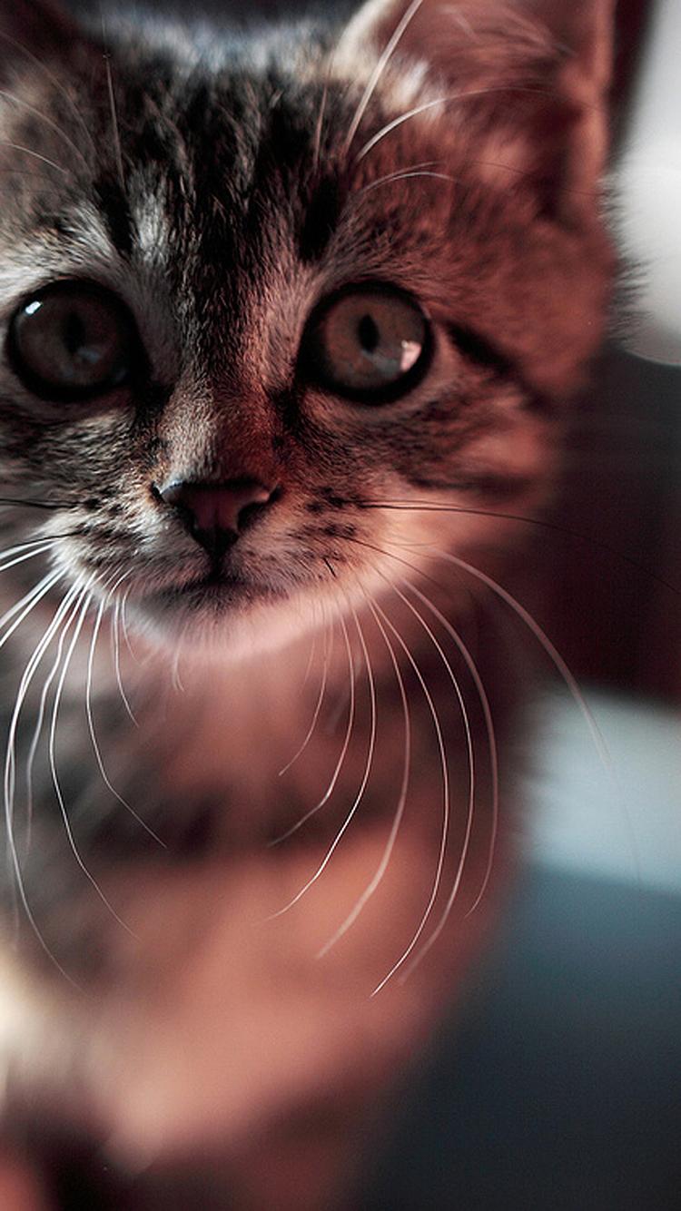 动物 猫咪 喵星人 黑猫 苹果手机高清壁纸 750x1334