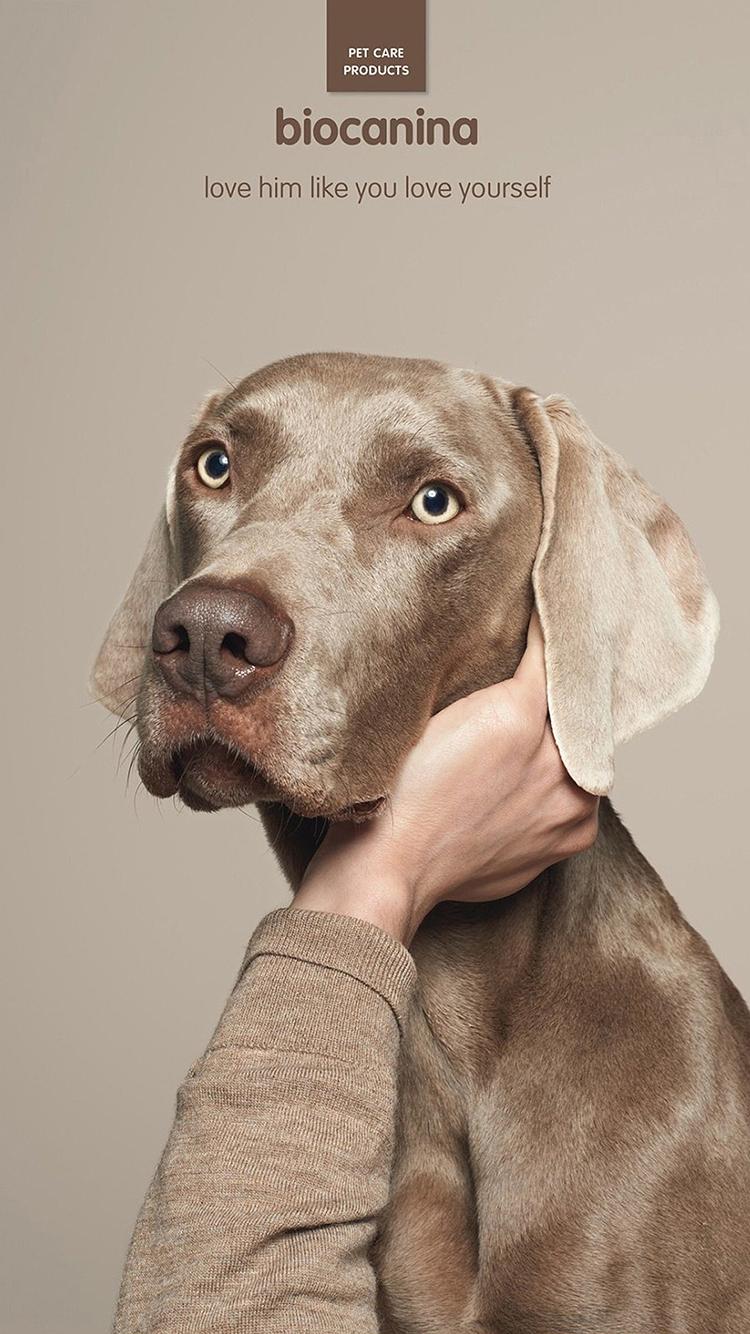 动物 创意 狗狗 挠头 苹果手机高清壁纸 750x1334