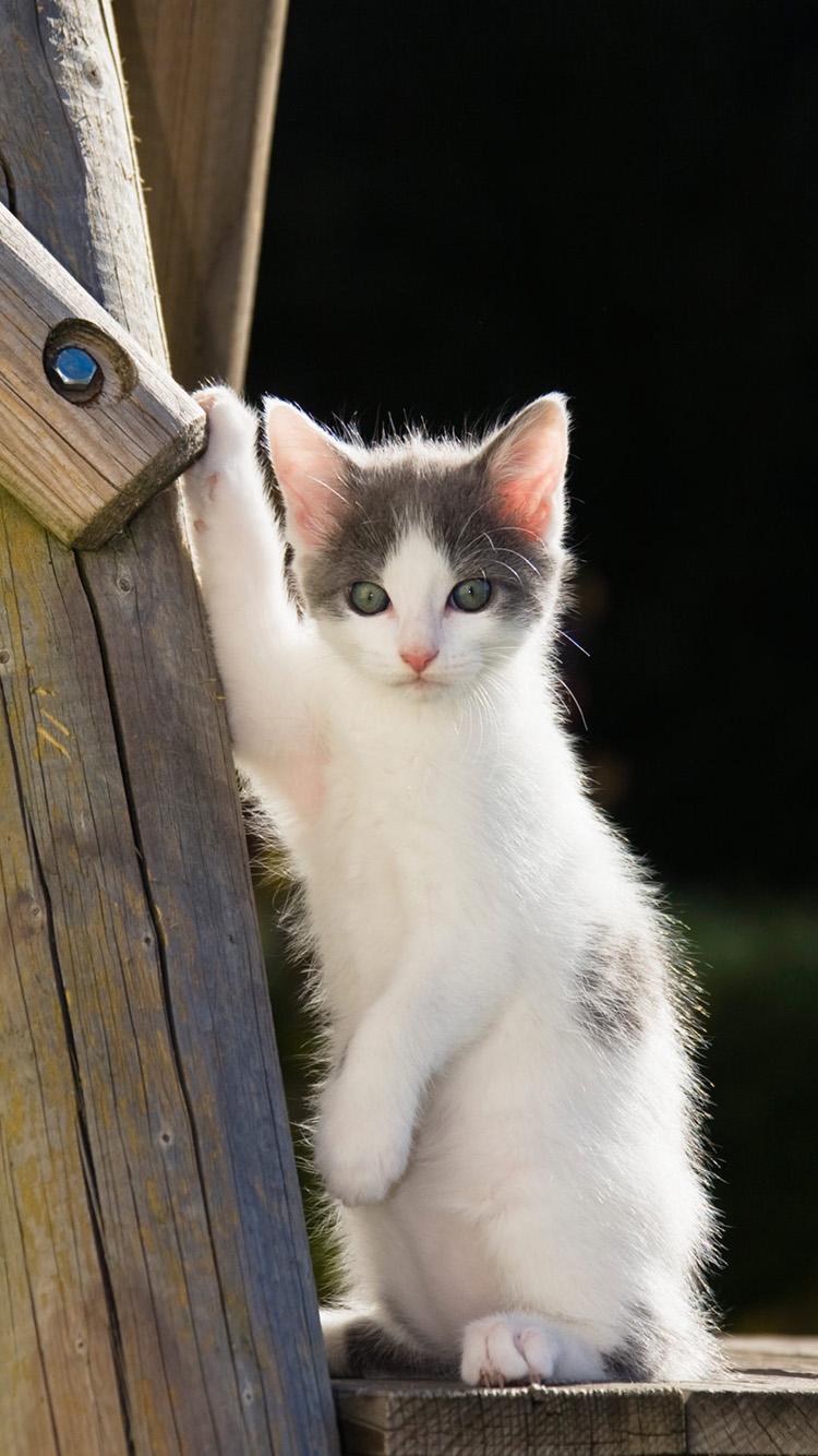 猫咪 动物 木头 白色 可爱 苹果手机高清壁纸 750x