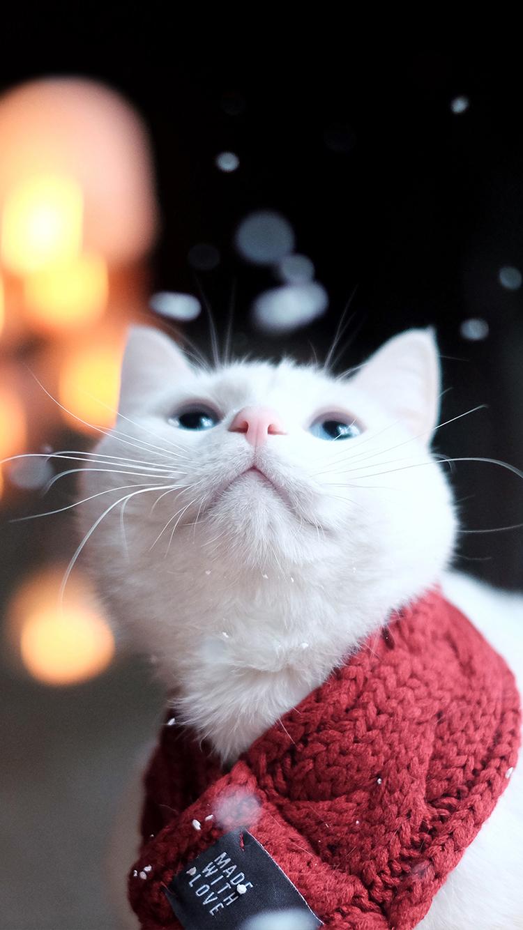 猫 喵星人 红色 白色 萌宠 动物 苹果手机高清壁纸 x