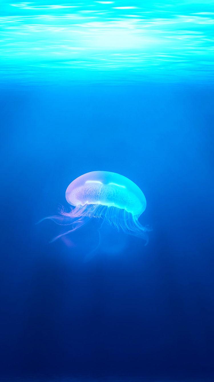 海洋生物 水母 唯美 蓝 大海 海底