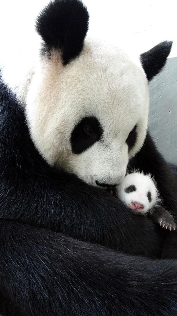 熊猫 黑白 动物 可爱