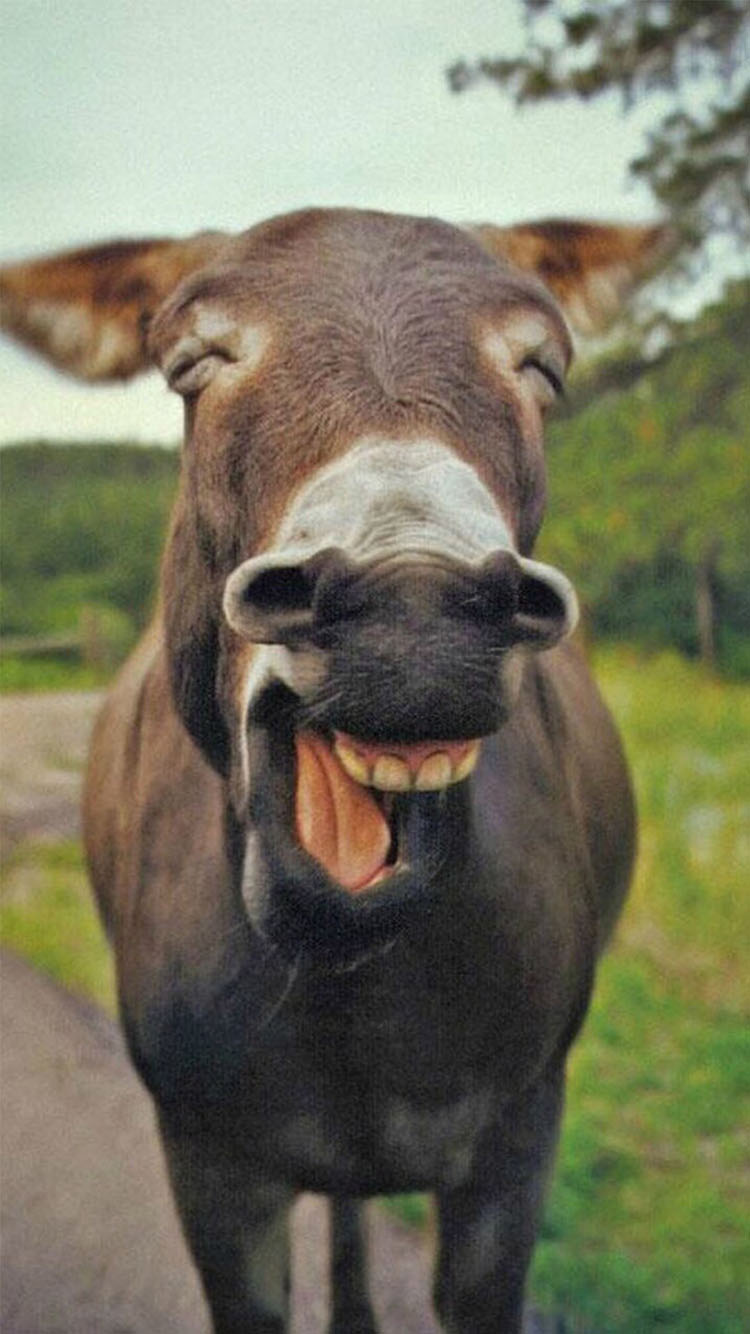 动物萌宠可爱笑脸