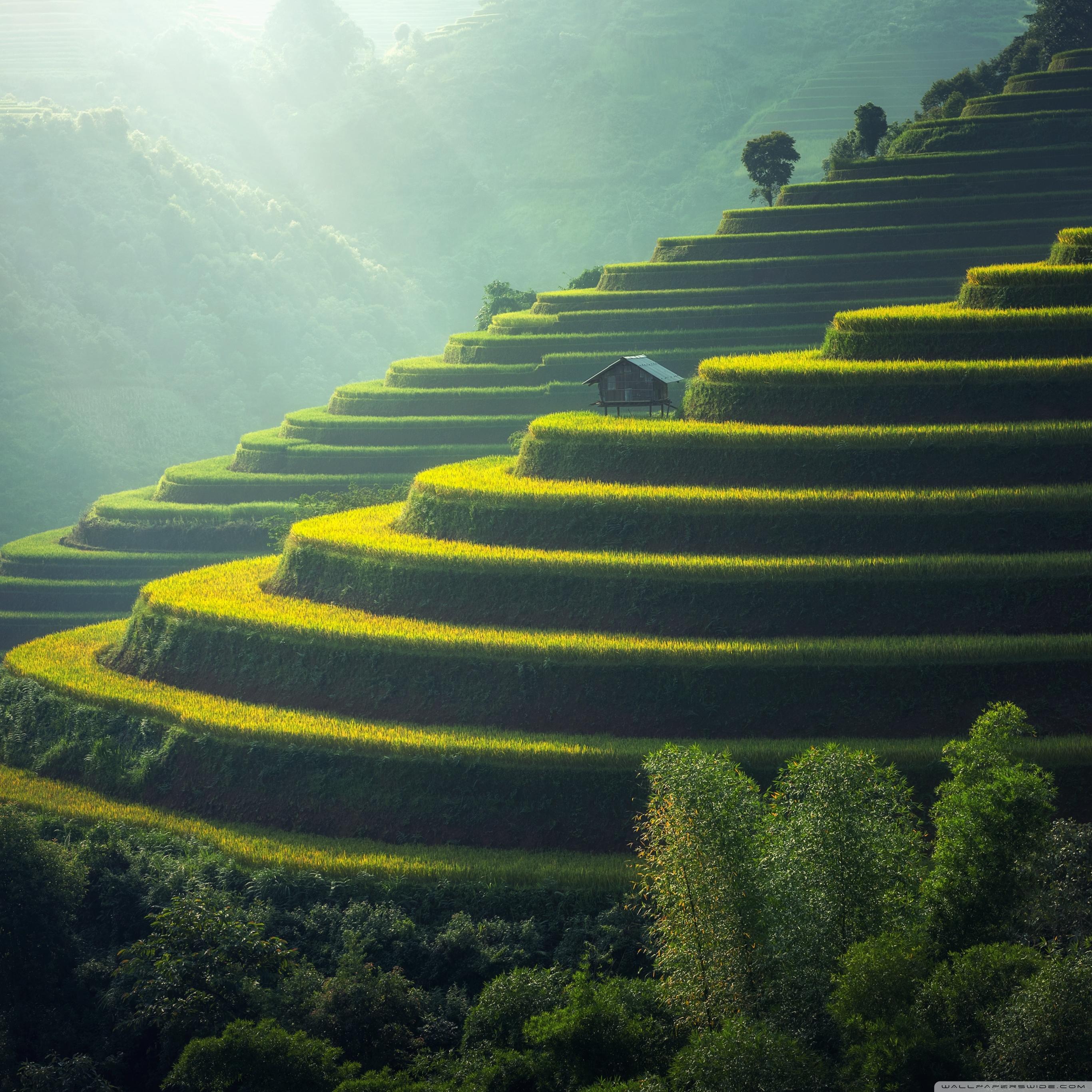 壁纸 成片种植 风景 植物 种植基地 桌面 2732_2732