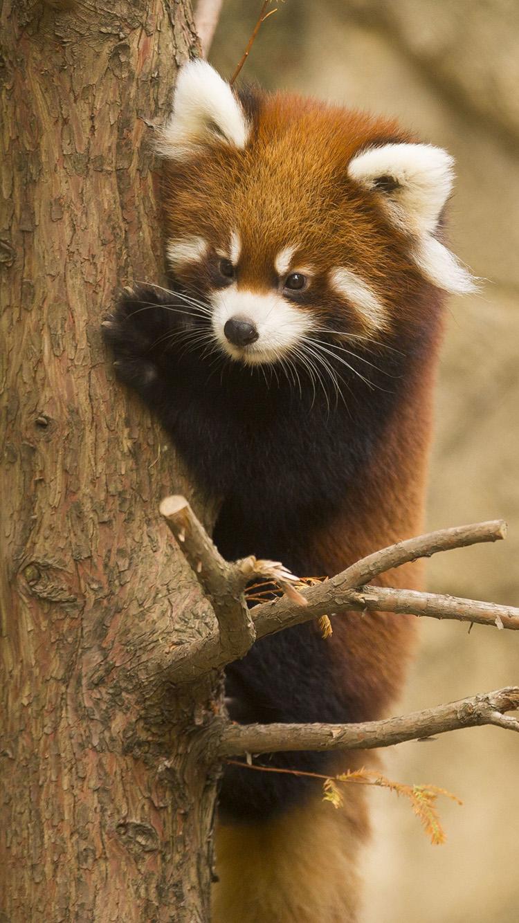 浣熊 树木 可爱 害怕