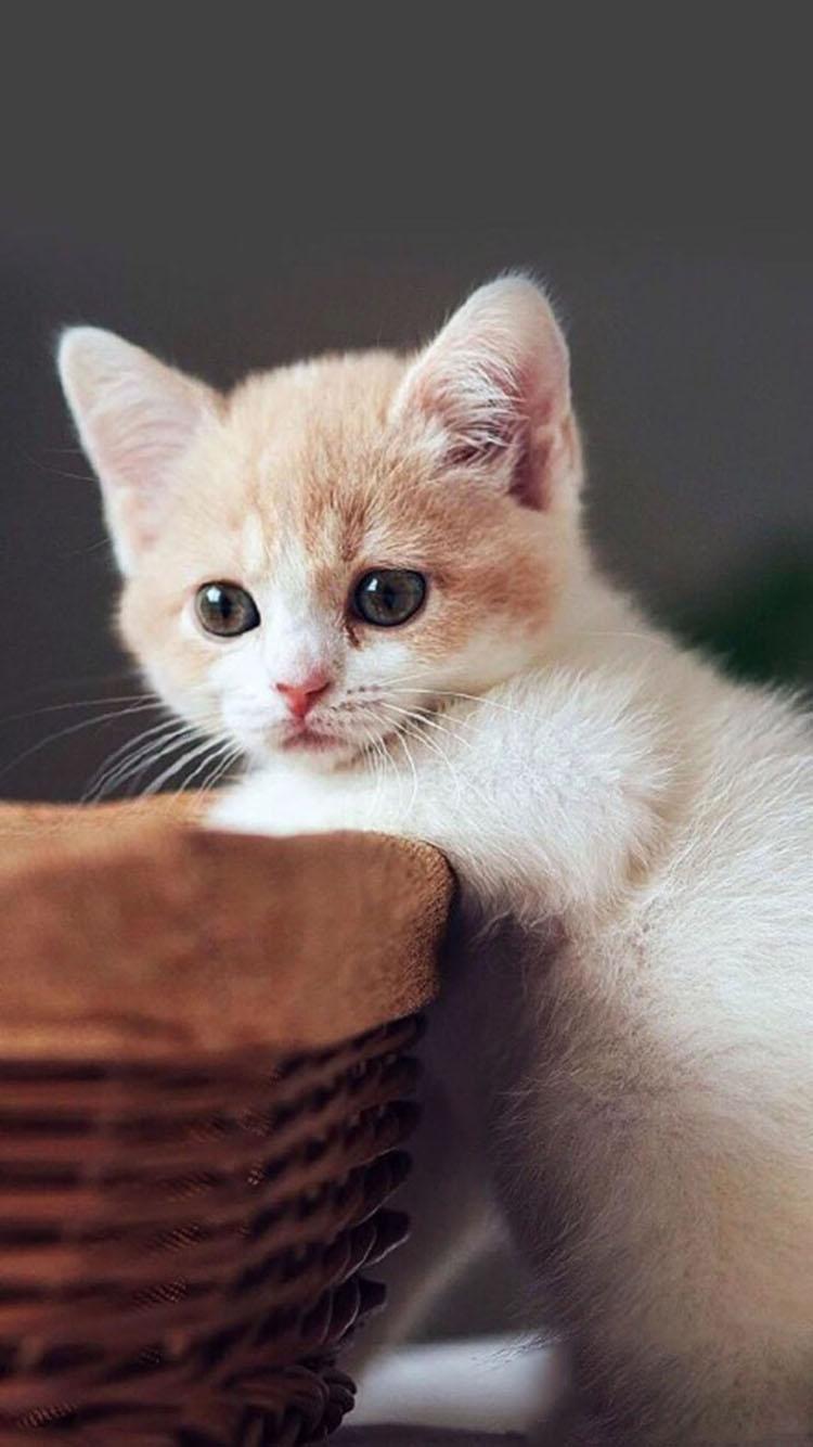 超萌可爱小猫咪