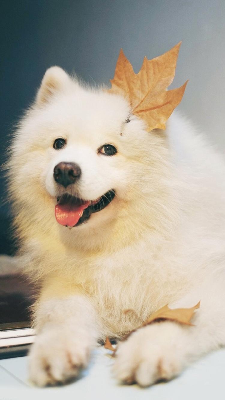 得意洋洋的狗 苹果手机高清壁纸 750x1334_爱思助手