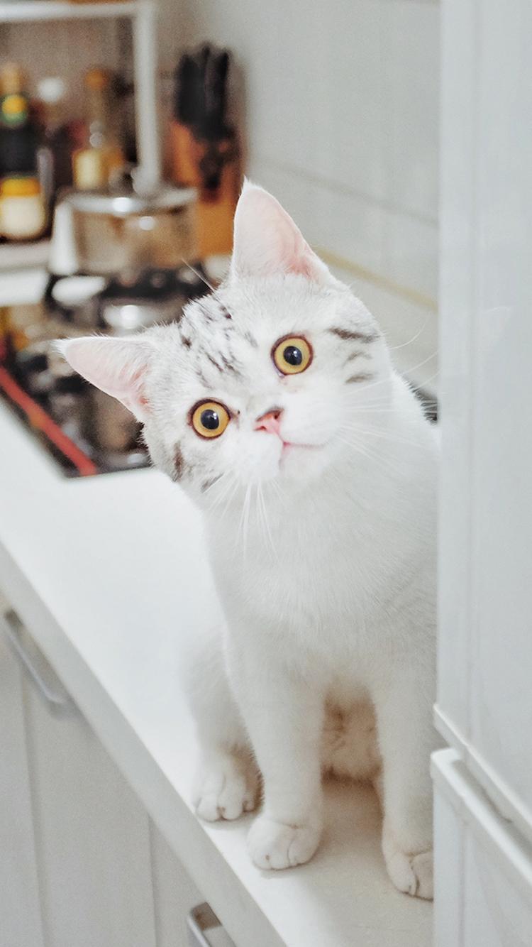 猫咪 萌宠 喵星人 动物 白色 苹果手机高清壁纸 750x
