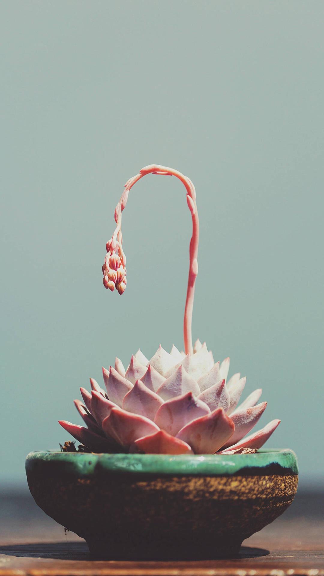 玫瑰 插花 鲜花 粉色 浪漫 苹果手机高清壁纸 1080x