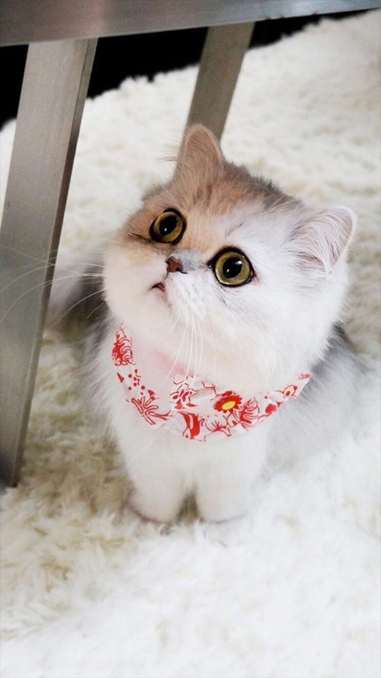 可爱 萌 猫咪 动物 彩色 苹果手机高清壁纸 750x1334