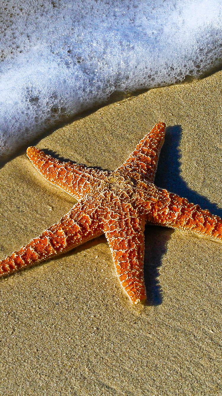 动物 海滩 气泡 海岸 棘皮动物 无脊椎动物 自然 沙 海滨 海边 岸