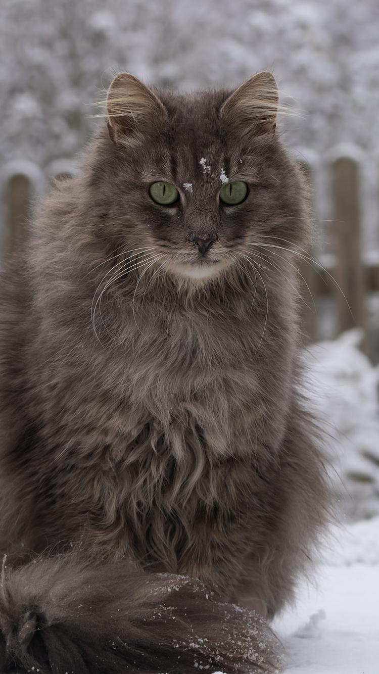 猫咪 小猫 动物 灰猫