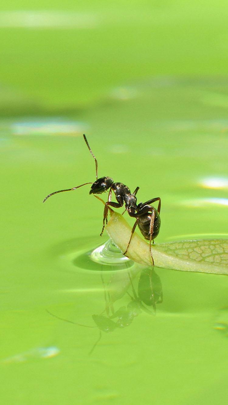 微小 螞蟻 綠色 蘋果手機高清壁紙 750x1334_愛思助手