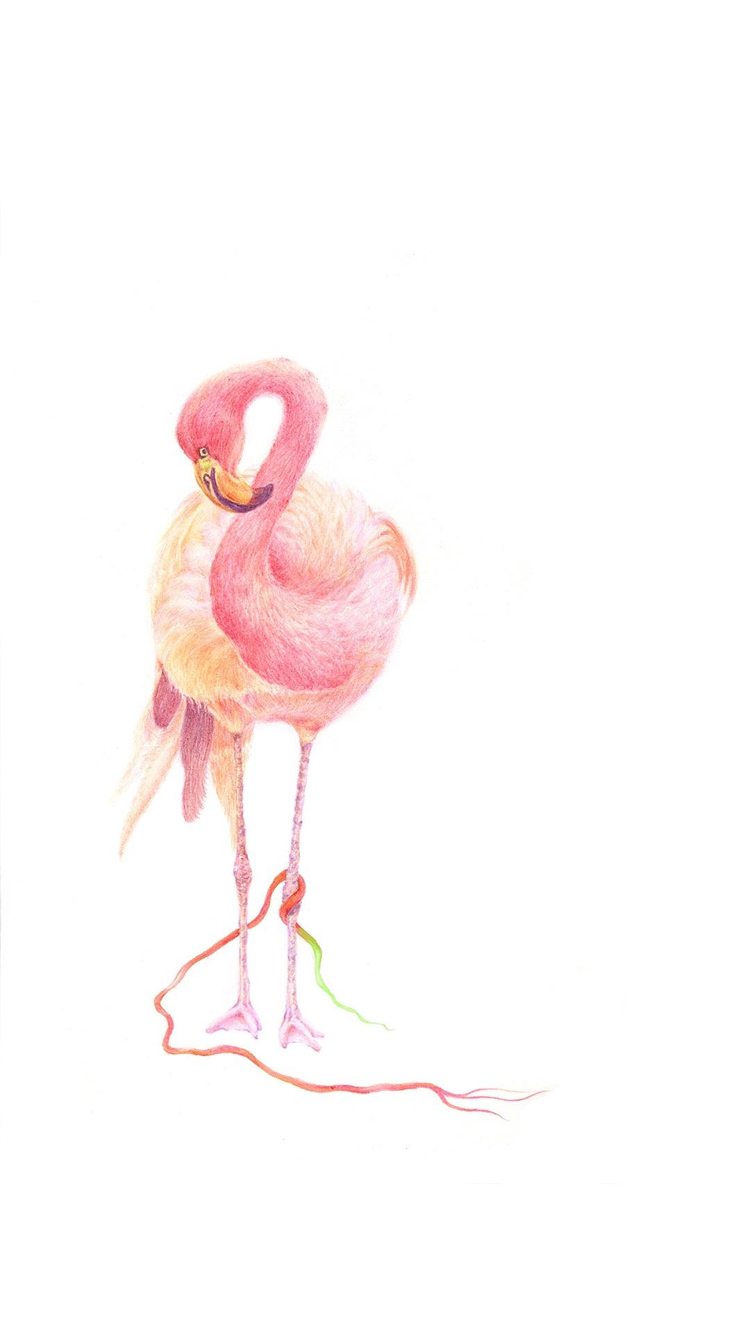 火烈鸟 动物 手绘 粉色
