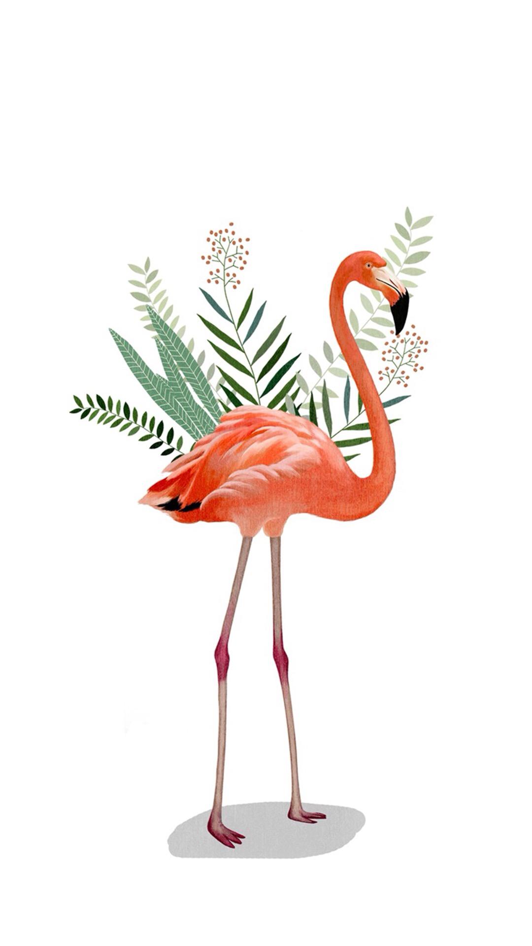 火烈鸟 粉色 手绘 插画 叶子 动物