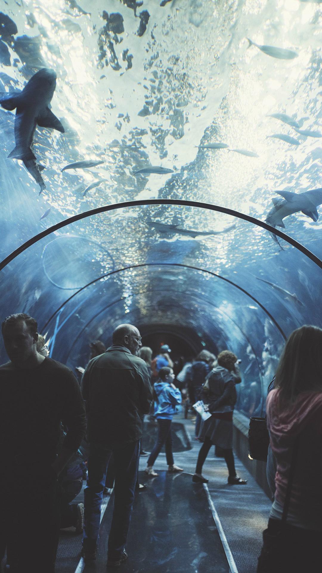 海底隧道 风景 海洋 海洋馆 苹果手机高清壁纸 1080x